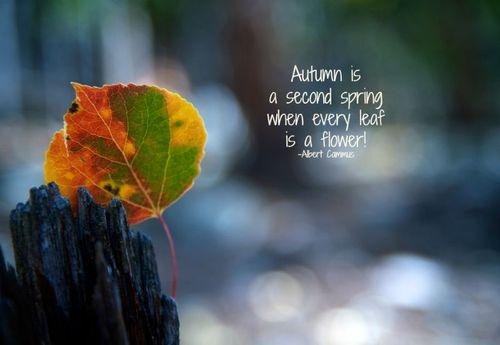 Aspen Leaf Autumn