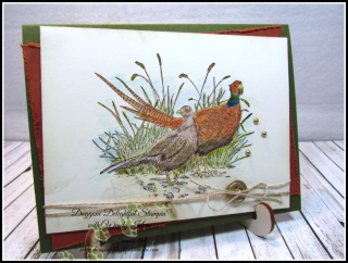 Pleasant Pheasant w_dry watercolor pencil technique - 2
