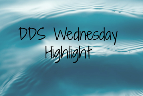 DDS Wednesday Highlight