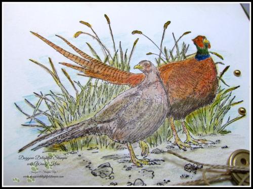Pleasant Pheasant w_dry watercolor pencil technique - 3