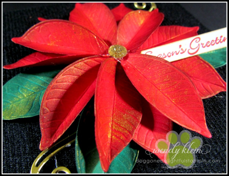 Nature's_Roots_Poinsettia-3